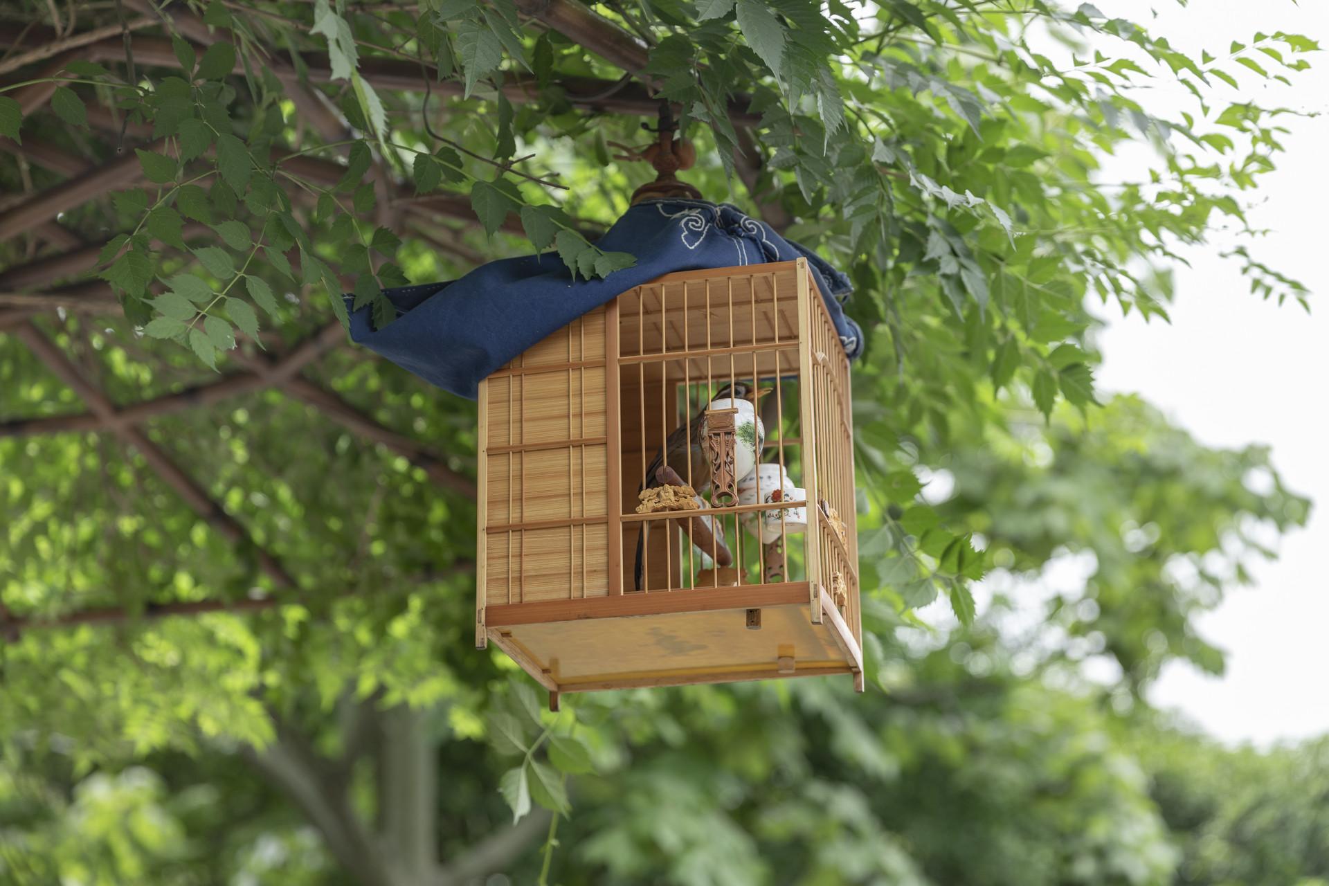 摄图网_501314559_banner_挂在树上的鸟笼(企业商用).jpg